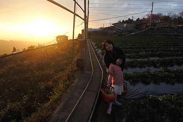 亞亞的馬拉邦草莓 (10).JPG