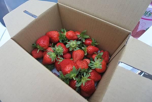 亞亞的馬拉邦草莓 (22).JPG