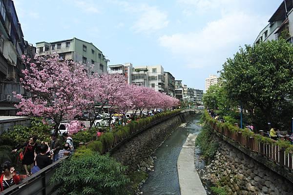 亞亞的櫻吹雪《希望之河》 (4).JPG