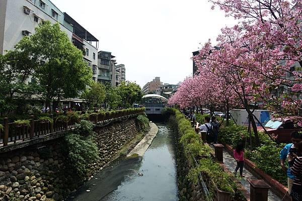 亞亞的櫻吹雪《希望之河》 (14).JPG
