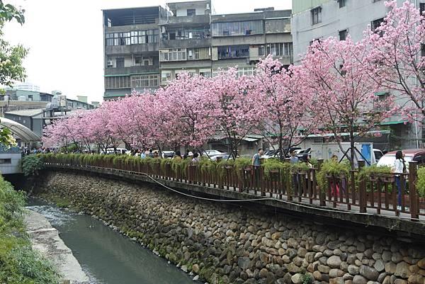 亞亞的櫻吹雪《希望之河》 (21).JPG