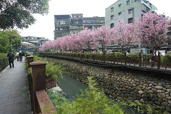 亞亞的櫻吹雪《希望之河》 (23).JPG