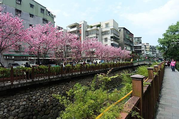 亞亞的櫻吹雪《希望之河》 (26).JPG
