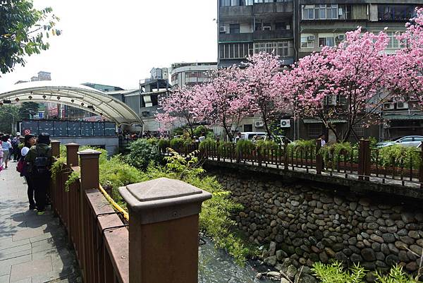 亞亞的櫻吹雪《希望之河》 (27).JPG