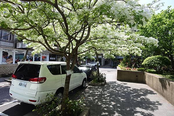 台北市新中公園 (3).JPG