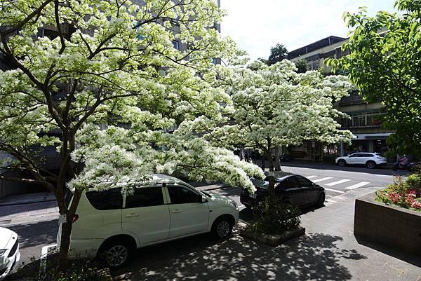 台北市新中公園 (5).JPG