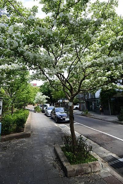 台北市新中公園 (10).JPG