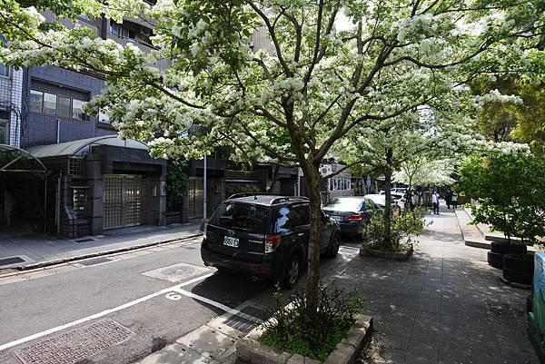台北市新中公園 (11).JPG