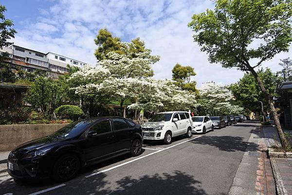 台北市新中公園 (13).JPG