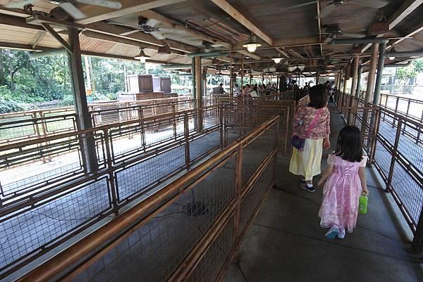 香港迪士尼樂園:森林河流之旅+加利布尼市集 (16).JPG