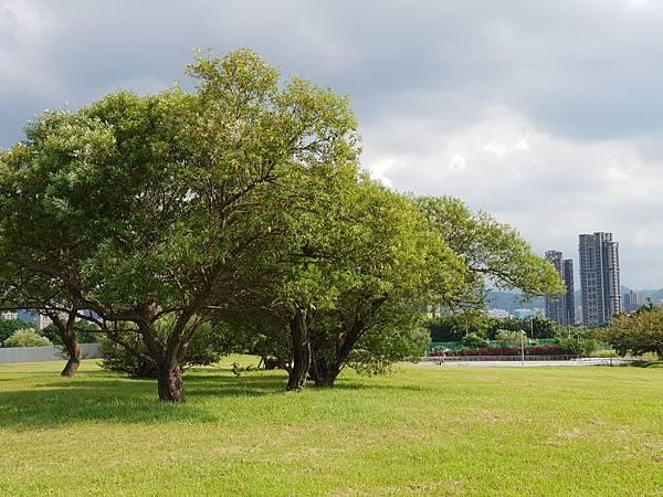 台北市華中河濱公園 (18).jpg