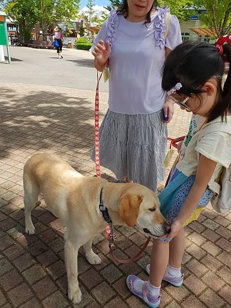 日本栃木県那須どうぶつ王国:レンタル犬 (6).jpg