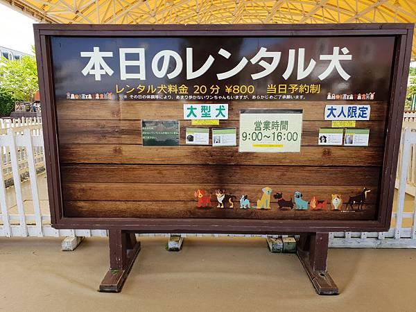 日本栃木県那須どうぶつ王国:レンタル犬 (17).jpg