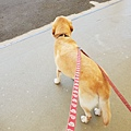 日本栃木県那須どうぶつ王国:レンタル犬 (24).jpg