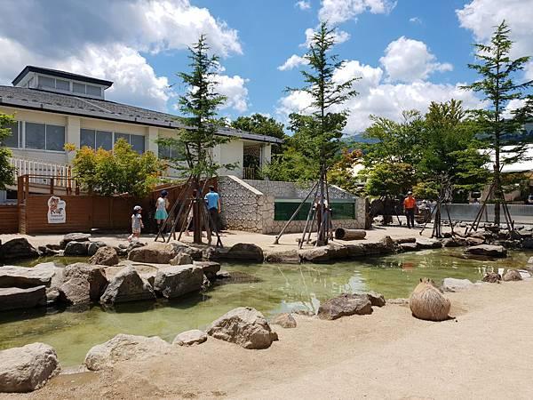 日本栃木県那須どうぶつ王国:カピバラの森 (5).jpg