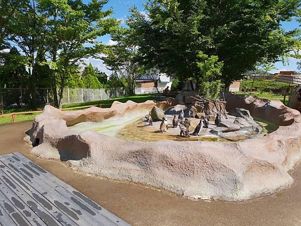 日本栃木県那須どうぶつ王国:ペンギンビレッジ (15).jpg