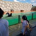 日本栃木県那須どうぶつ王国:アクアステージ (5).jpg