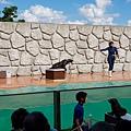 日本栃木県那須どうぶつ王国:アクアステージ (24).jpg