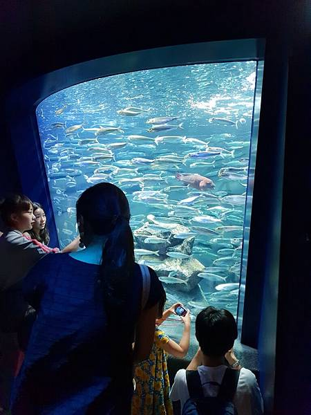 日本東京都Sunshine City:sunshine aQuarium (41).jpg