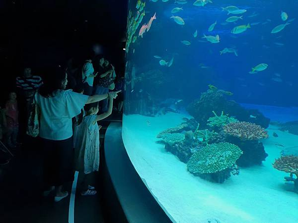 日本東京都Sunshine City:sunshine aQuarium (51).jpg