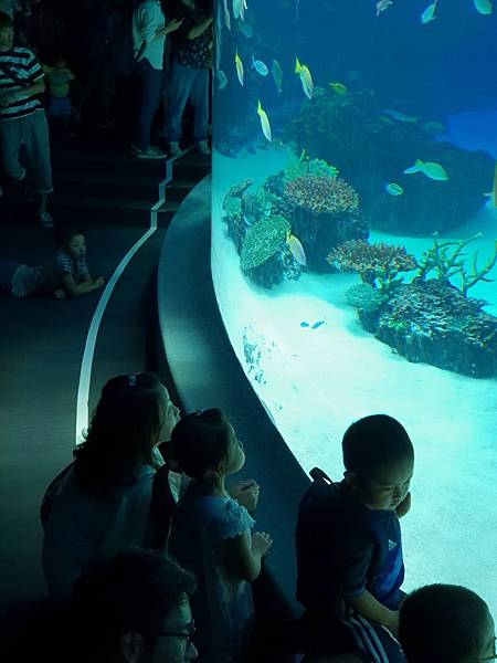 日本東京都Sunshine City:sunshine aQuarium (50).jpg