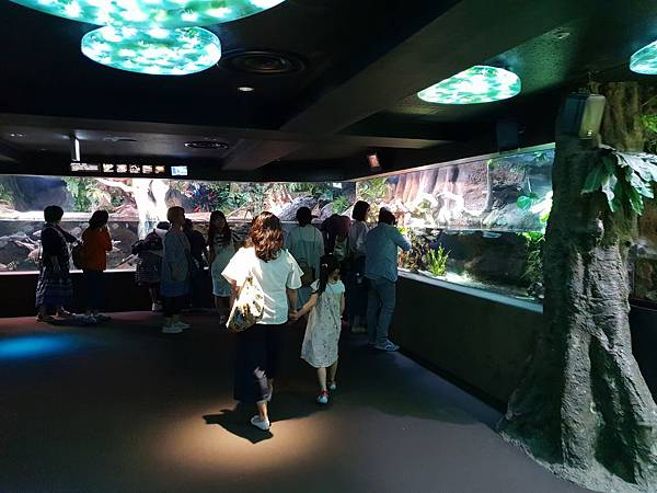 日本東京都Sunshine City:sunshine aQuarium (61).jpg