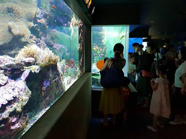 日本東京都Sunshine City:sunshine aQuarium (65).jpg