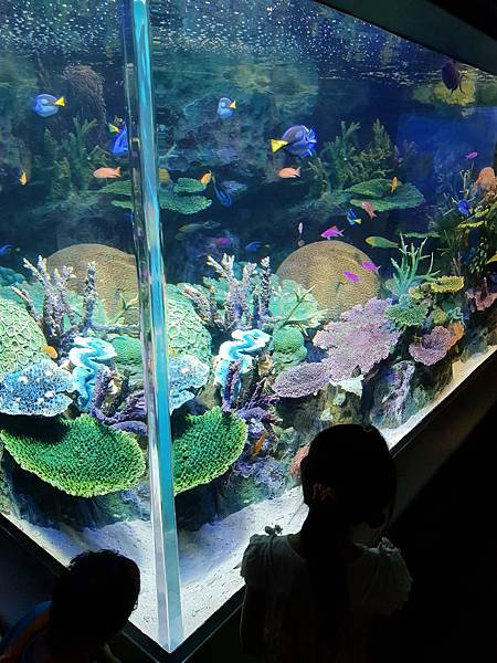 日本東京都Sunshine City:sunshine aQuarium (66).jpg