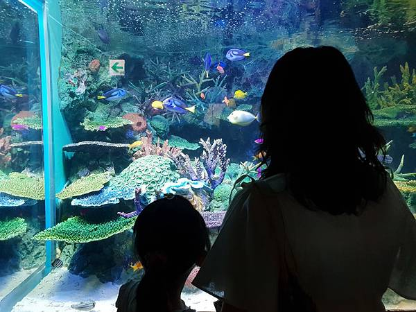 日本東京都Sunshine City:sunshine aQuarium (68).jpg