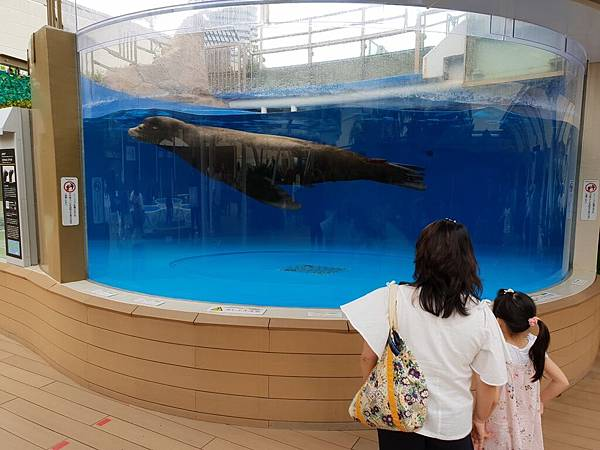 日本東京都Sunshine City:sunshine aQuarium (74).jpg