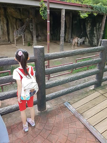 亞亞的動物園家庭日 (7).jpg