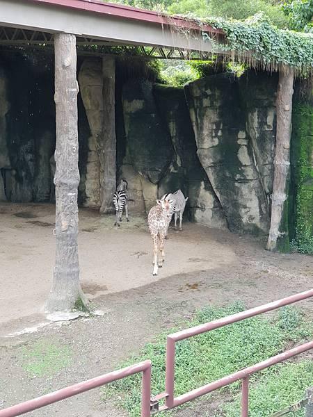 亞亞的動物園家庭日 (8).jpg