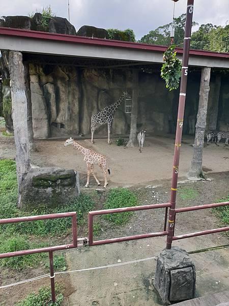 亞亞的動物園家庭日 (11).jpg