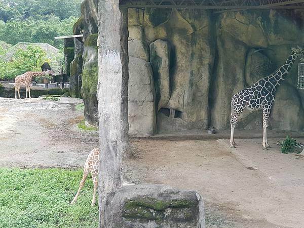 亞亞的動物園家庭日 (12).jpg
