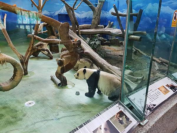 亞亞的動物園家庭日 (60).jpg