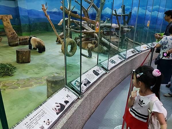 亞亞的動物園家庭日 (62).jpg