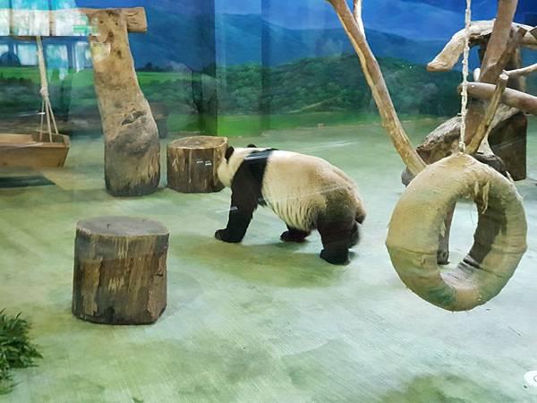 亞亞的動物園家庭日 (61).jpg