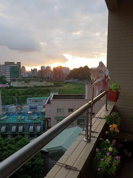 亞亞的陽台小花園寫生 (3).jpg