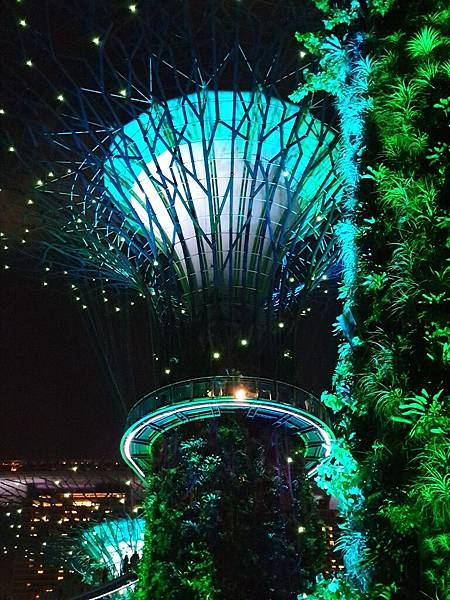 新加坡Gardens by the Bay (17).jpg