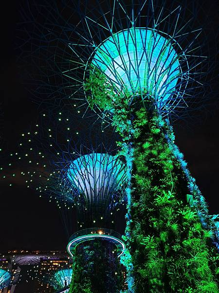 新加坡Gardens by the Bay (18).jpg
