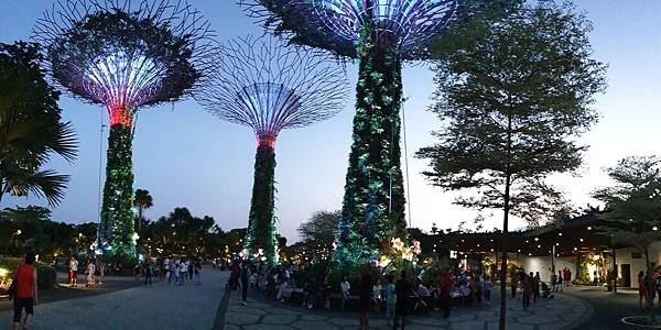 新加坡Gardens by the Bay (60).jpg