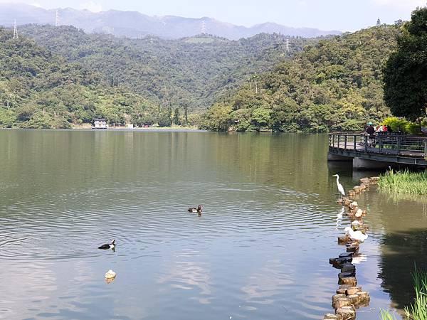 亞亞的龍潭湖遛奶油 (22).jpg