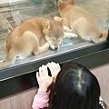 亞亞的環球狗狗夢 (6).jpg