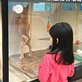 亞亞的環球狗狗夢 (8).jpg
