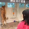 亞亞的環球狗狗夢 (7).jpg