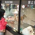 亞亞的環球狗狗夢 (10).jpg