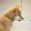 亞亞的環球狗狗夢 (12).jpg