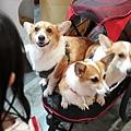 亞亞的上聯台北寵物用品博覽會 (1).jpg