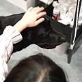 亞亞的上聯台北寵物用品博覽會 (7).jpg