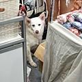 亞亞的上聯台北寵物用品博覽會 (14).jpg